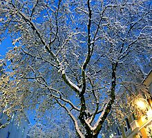 Snow Covered Tree, Queen Street, Cardiff. by Artberry