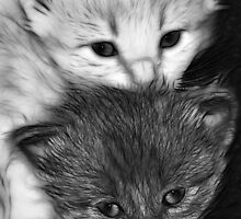 Kittens by SuddenJim