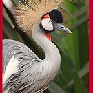 Grey Crested Crane iPhone cover by Brad Francis