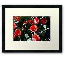 Botany 11 Framed Print