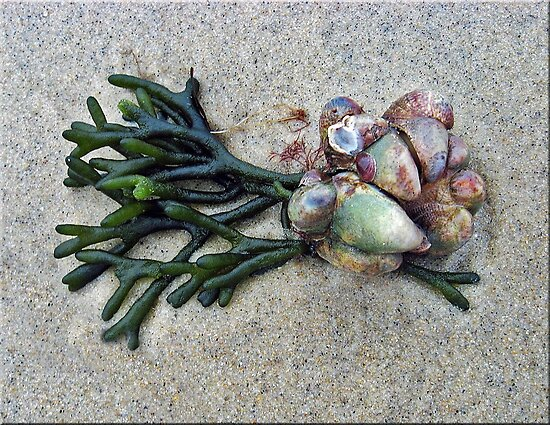 A Bouquet from the Sea by Bine