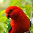 King Parrot by Laura  Knight