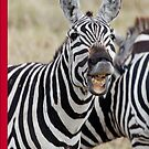 Laughing Zebra iPhone cover by Brad Francis