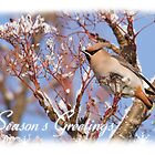 Beautiful Waxwing Christmas Card by Nigel Tinlin