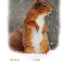 Squirrel Wildlife Christmas Card by Nigel Tinlin