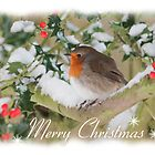 Holly & Robin Christmas Card by Nigel Tinlin