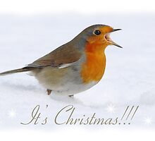 Christmas Card with Robin by Nigel Tinlin