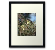 Willow warbler (Phylloscopus trochilus) Framed Print