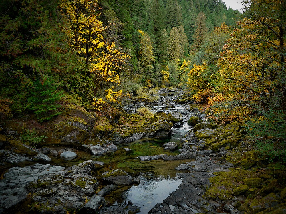 Looking For Gold by Charles & Patricia   Harkins ~ Picture Oregon