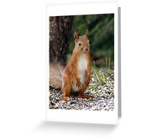 A red squirrel with nothing to do Greeting Card
