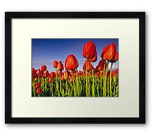 Basking in the evening sun Framed Print