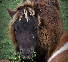 I do NOT need your hairbrush thanks! by Heather King