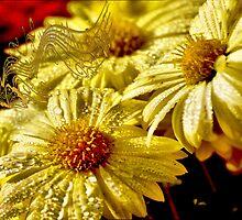 Tune of yellow chrysanthemums by kindangel