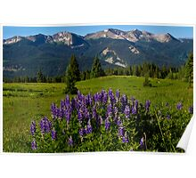 Lupine And The Anthracite Range Poster