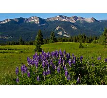 Lupine And The Anthracite Range Photographic Print