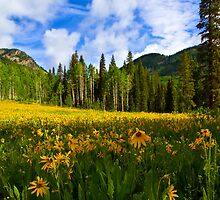 Mule Ear Sunflowers, Colorado by CrowningGlory