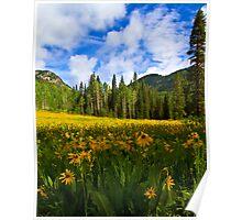 Mule Ear Sunflowers, Colorado Poster