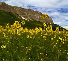 Gothic Mountain And Sunflowers by CrowningGlory