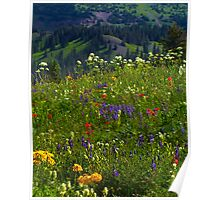 Wildflower Meadows Above Lake Irwin Poster