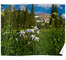 Colorado Blue Columbine And Peeler Peak Poster