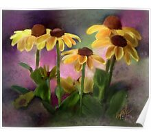 Black-eyed Susan Flower Blossoms Poster