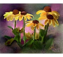 Black-eyed Susan Flower Blossoms Photographic Print
