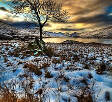 Arklet Tree (3) by Karl Williams