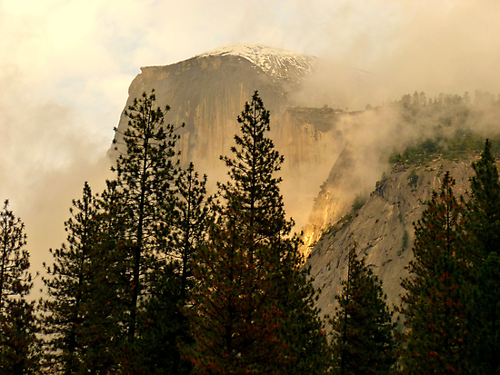 """Gold """"Rush"""" in Yosemite National Park by Elaine Bawden"""
