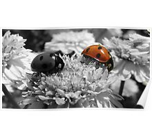 Ladybirds selective colouring Poster
