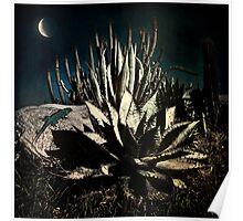 Night at the Desert's Edge Poster