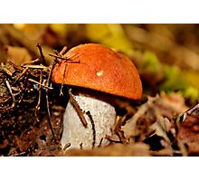 Rusty Cap Photographic Print