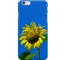 Sunflower Against Blue Sky iPhone Case iPhone Case/Skin
