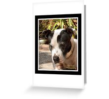 Bulldog versus Hornet Greeting Card