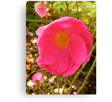 Governor General's rose 14 Canvas Print