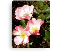 Governor General's roses 12 Canvas Print