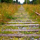 Overgrown Train Tracks by Erika  Hastings