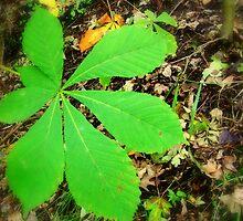 A Fallen Leaf by shelleybabe2