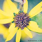 Untitled by mandithephotog