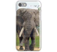 The ELEPHANT (Loxodonta Africana) iPhone Case/Skin