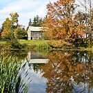 Reflections of Fall by ReneR