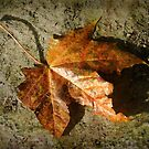 fallen ... by dinghysailor1