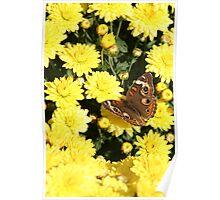 Bright Autumn - Common Buckeye 4 Poster