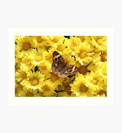 Bright Autumn - Common Buckeye 3 Art Print