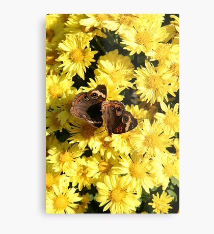 Bright Autumn - Common Buckeye 1 Metal Print