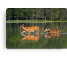 Whitetail Deer and Twin Fawns Canvas Print