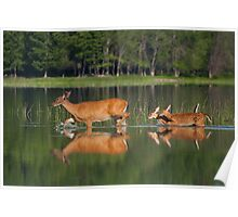 Whitetail Deer and Twin Fawns Poster