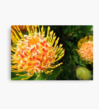 Firery flower Canvas Print