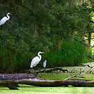 Morning Pond Egrets by Charlie