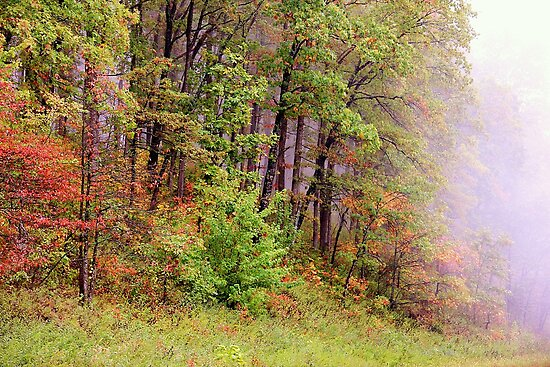 Autumn Fog by NatureGreeting Cards ©ccwri