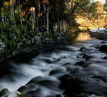 Icy Stream  by Michael Treloar